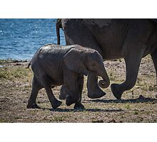 Baby elephant walking with mother beside river Photographic Print