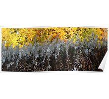 Autumn Textures Poster