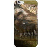 wildlife in puerto vallarta II - vida salvaje en puerto vallarta iPhone Case/Skin