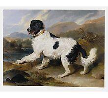 Edwin Landseer - Lion A Newfoundland Dog 1824.  Landseer Photographic Print
