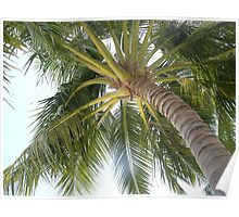 Palm treetop Poster