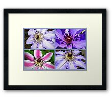 Clematis Collage Framed Print