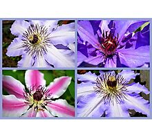 Clematis Collage Photographic Print