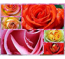 Love Roses Photographic Print
