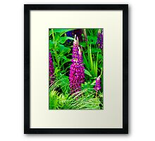 Purple Lupine Flower Framed Print