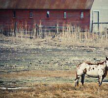 Horse by Jen Wahl