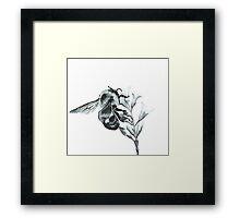 Monochrome Bee Framed Print