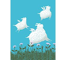 Flying Sheep Meadow Larks Photographic Print