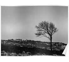 Wind Bent Tree Poster