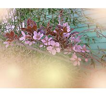 Blossoms Green House Photographic Print