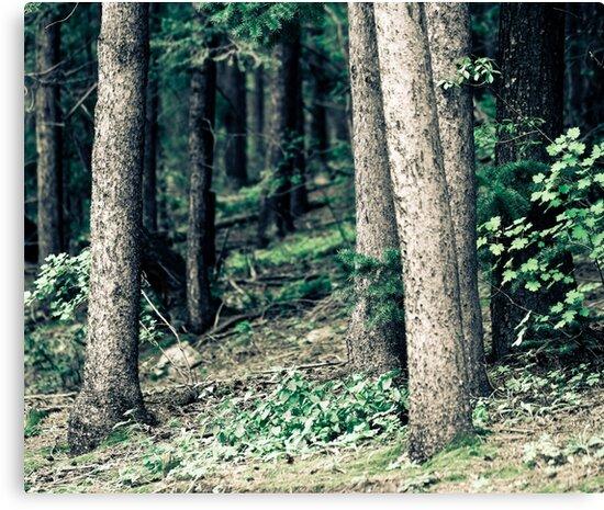 Trees by Jen Wahl