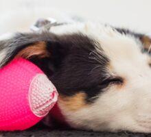 Sleeping Puppy Sticker