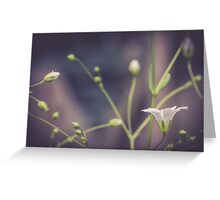Baby's Breath V Greeting Card