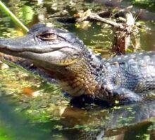 Baby Alligator Sticker
