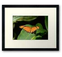 Julia or Flambeau Butterfly perched on leaf Framed Print