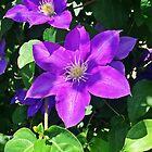 Flower by pmarella
