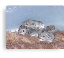 Baby Mice Canvas Print