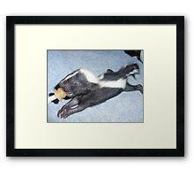 Baby Skunk Framed Print