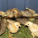 Real Chicks!  Aren't We Cute by MaeBelle