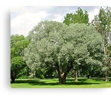 Beautiful Willow Tree Canvas Print