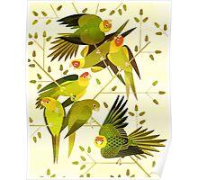 Carolina Parakeet Poster