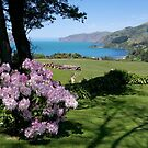 Garden View, Banks Peninsula, South Island, New Zealand. by johnrf