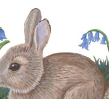 Bluebells and wild rabbit Sticker