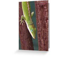 Hawaii - Maui - Lizard Greeting Card