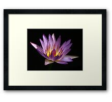 Purply waterlily with glowing yellow core Framed Print