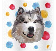 Cute Alaskan Malamute Poster