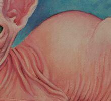 Pink Sphynx  Sticker
