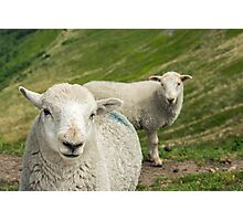The Lamb Brothers Photographic Print