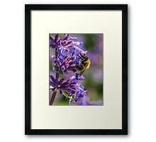 Bumblebee Collecting Nectar  Framed Print