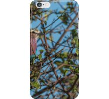 Lilac-breasted roller perched in leafy bush iPhone Case/Skin