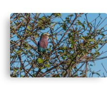 Lilac-breasted roller perched in leafy bush Canvas Print