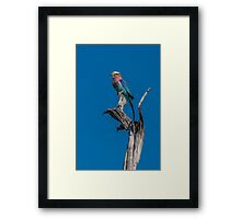 Lilac-breasted roller perched on dead tree stump Framed Print