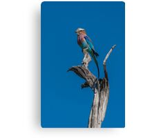 Lilac-breasted roller perched on dead tree stump Canvas Print