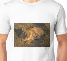 Lion lying in golden light facing camera Unisex T-Shirt