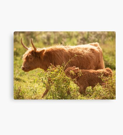 Country Cows Canvas Print