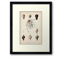 Proceedings of the Zoological Society of London 1848 - 1860 V5 Mollusca 049 Framed Print
