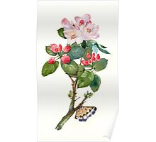 Apple flowers Poster