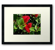 Robust Red Framed Print