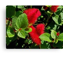 Robust Red Canvas Print