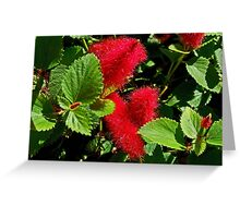 Robust Red Greeting Card