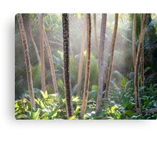 Light through the rainforest Canvas Print