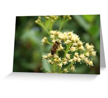 Bee With Striped Eyes Greeting Card