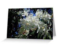 Budding Blossoms Greeting Card