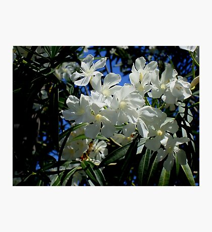 Budding Blossoms Photographic Print