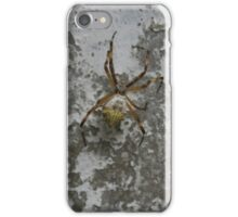 Orb Weaver Spider on a Wall iPhone Case/Skin