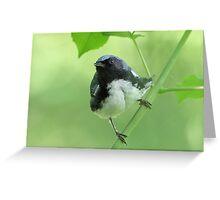 Black-throated Blue Warbler Greeting Card